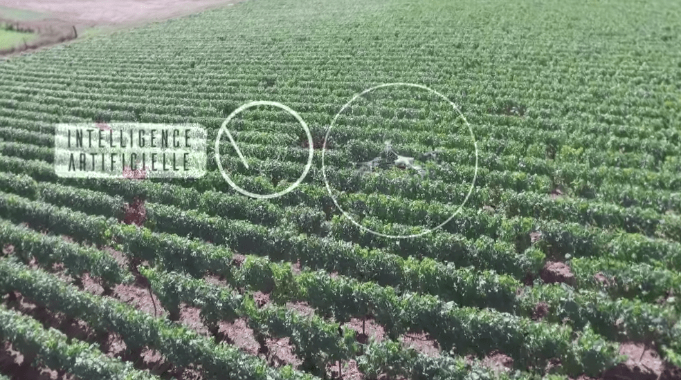 Terabee Blog TeraRanger One helps ensure vineyard health with drone-based solution