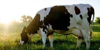 Terabee Sensors Modules Testing Optical Time-of-Flight Distance Sensors to Monitor Milk Levels